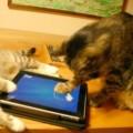 таблет за котки