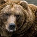 мечка