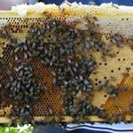 Инж. Михаил Михайлов: Средно за страната загубата на пчелни семейства е 50 %, но в района на Странджа достига 85 %