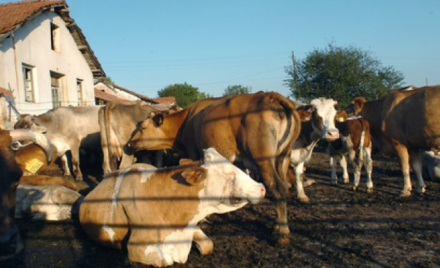 Виц: Крава