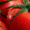 домат, домати, зеленчуци