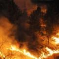 пожар в гора, горски пожар