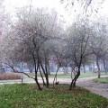 дървета в парк, пролет, есен