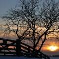 Слънчев зимен ден, времето, време, зима, сняг, слънце, дърво