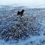 Адски студ в Норвегия! Рибата замръзна в морето (СНИМКА)
