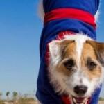 Вижте невероятните трикове на най-умното куче на света – Джеси