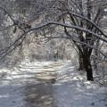 Сняг, време, зима, гора, времето, дървета, пътека