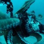 Вижте как хитър октопод се крие от нагъл водолаз (видео)