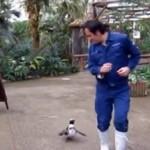 Да не повярваш! Пингвин се влюби в работник в зоопарк (Снимки и видео)