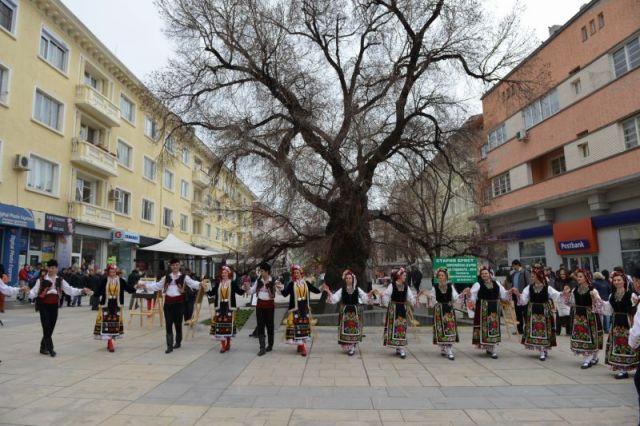 Старият бряст в Сливен спечели приза за европейско дърво на годината