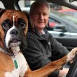Вижте кучето, което подканя собственика си да тръгва с клаксон