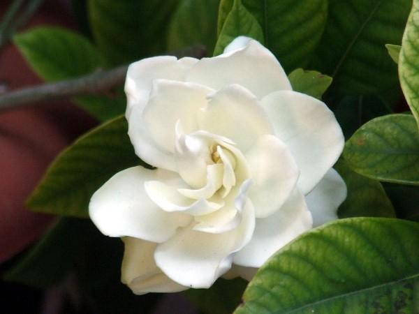 5 Аромата подходящи за Цветница