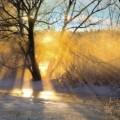 Прогноза за времето, сняг, време, зима, гора, времето, дървета, пътека, слънце