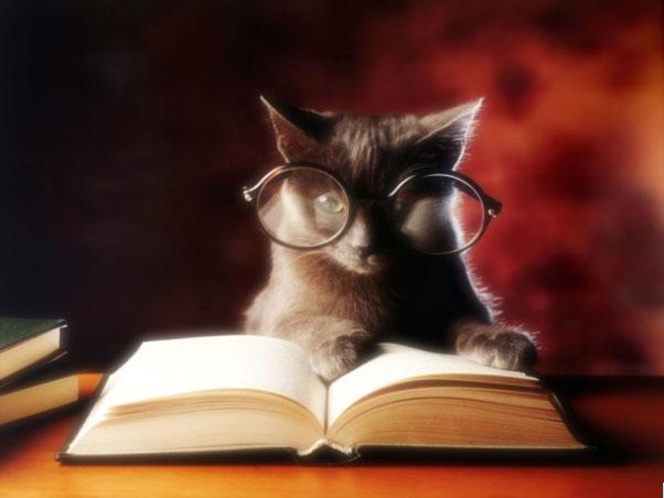 Застраховки, котета, коте, книга, чело коте книжки,